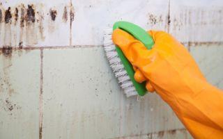 Причины появления плесени в ванной на швах плитки и как от нее избавиться